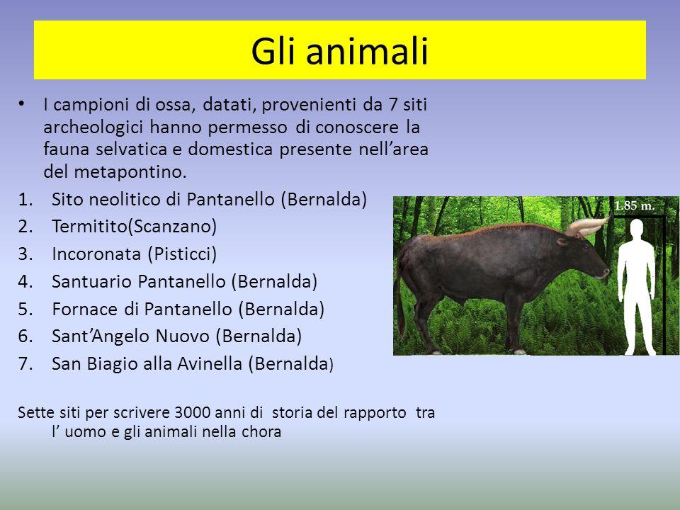 Gli animali I campioni di ossa, datati, provenienti da 7 siti archeologici hanno permesso di conoscere la fauna selvatica e domestica presente nell'ar