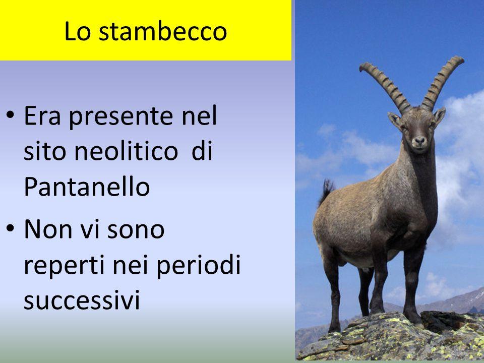 Lo stambecco Era presente nel sito neolitico di Pantanello Non vi sono reperti nei periodi successivi