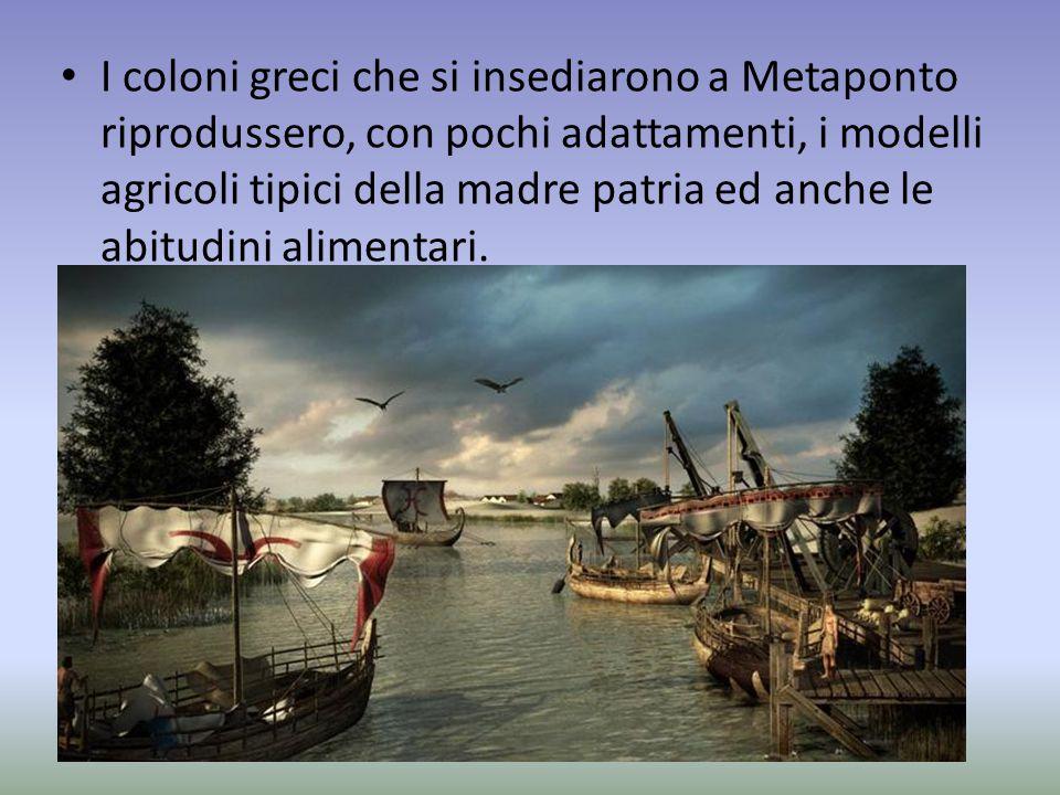 I coloni greci che si insediarono a Metaponto riprodussero, con pochi adattamenti, i modelli agricoli tipici della madre patria ed anche le abitudini