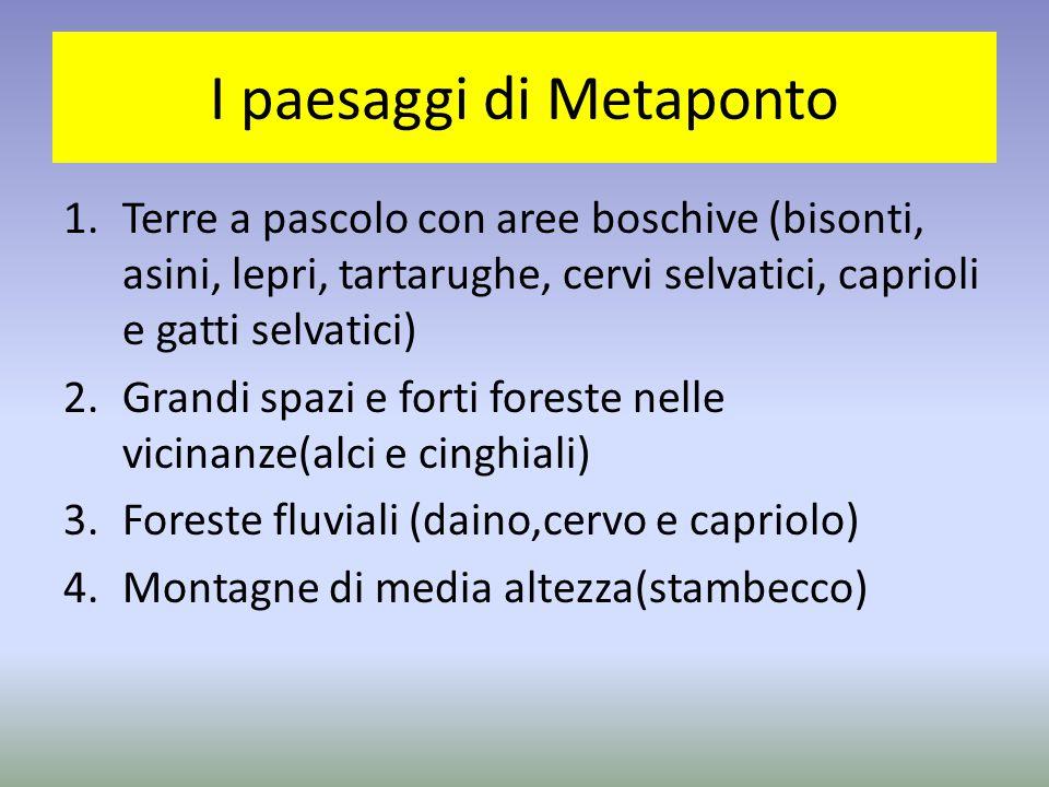 I paesaggi di Metaponto 1.Terre a pascolo con aree boschive (bisonti, asini, lepri, tartarughe, cervi selvatici, caprioli e gatti selvatici) 2.Grandi