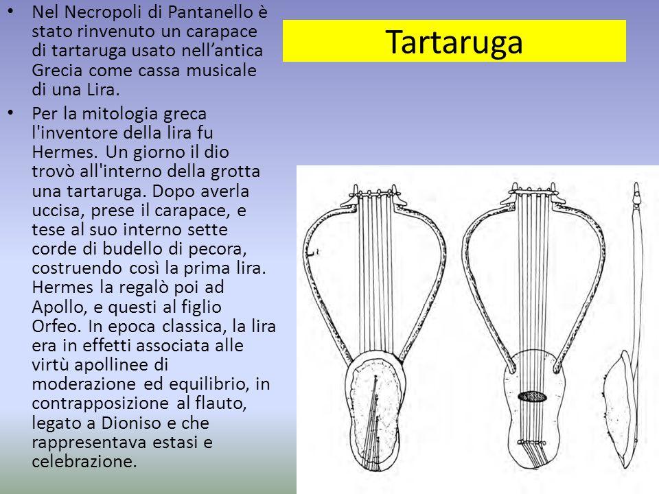Tartaruga Nel Necropoli di Pantanello è stato rinvenuto un carapace di tartaruga usato nell'antica Grecia come cassa musicale di una Lira. Per la mito