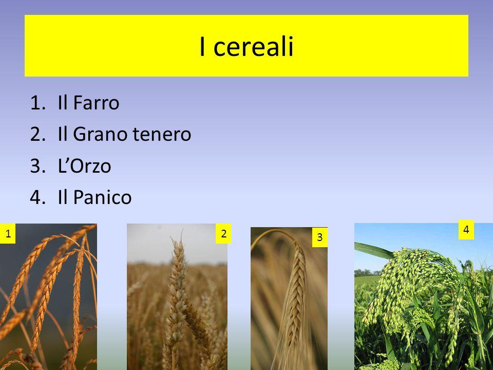 I cereali 1.Il Farro 2.Il Grano tenero 3.L'Orzo 4.Il Panico 12 3 4