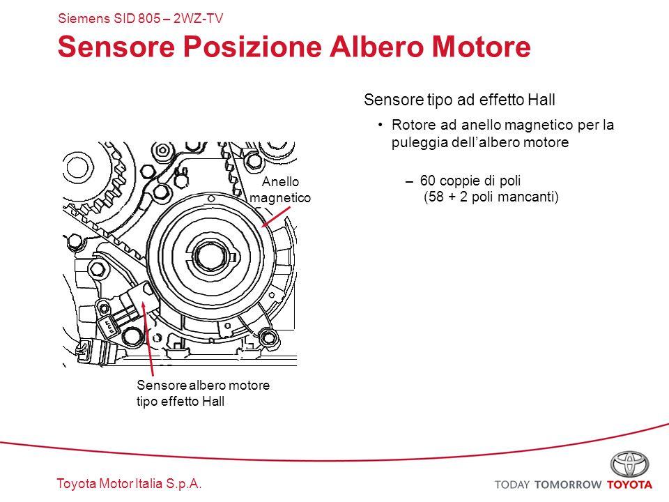 Toyota Motor Italia S.p.A. Sensore Posizione Albero Motore Sensore tipo ad effetto Hall Rotore ad anello magnetico per la puleggia dell'albero motore