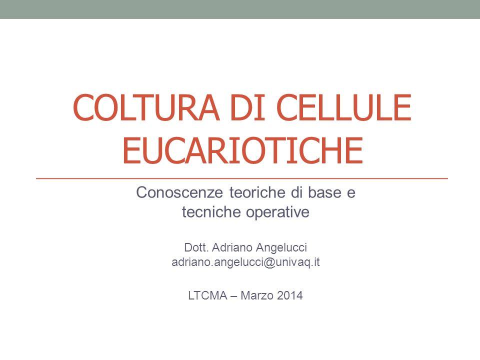 COLTURA DI CELLULE EUCARIOTICHE Conoscenze teoriche di base e tecniche operative Dott.