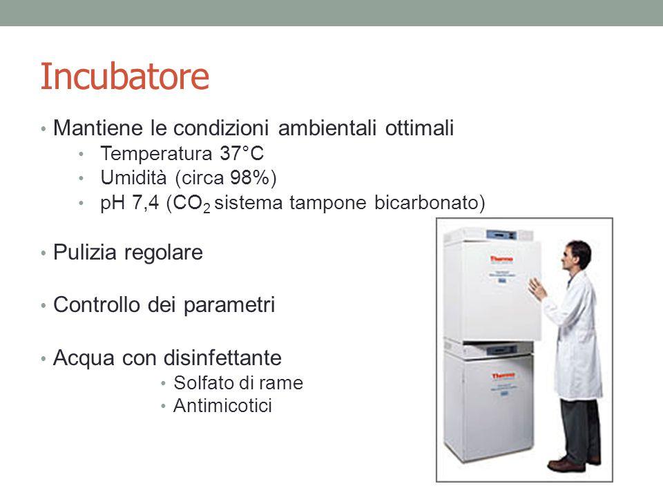 Incubatore Mantiene le condizioni ambientali ottimali Temperatura 37°C Umidità (circa 98%) pH 7,4 (CO 2 sistema tampone bicarbonato) Pulizia regolare Controllo dei parametri Acqua con disinfettante Solfato di rame Antimicotici