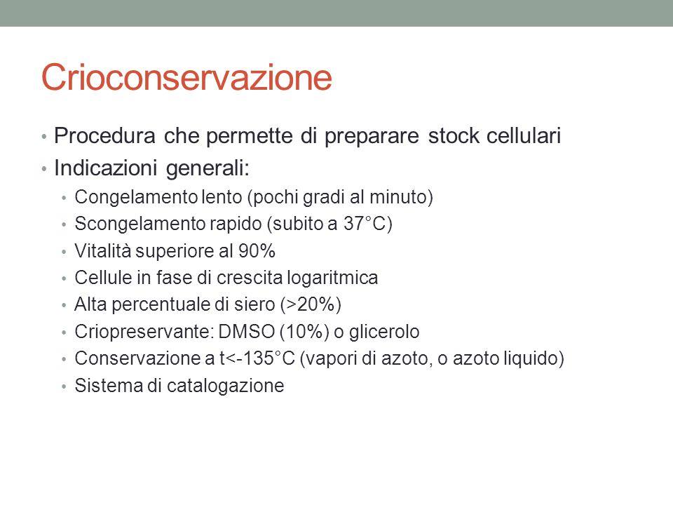 Crioconservazione Procedura che permette di preparare stock cellulari Indicazioni generali: Congelamento lento (pochi gradi al minuto) Scongelamento r