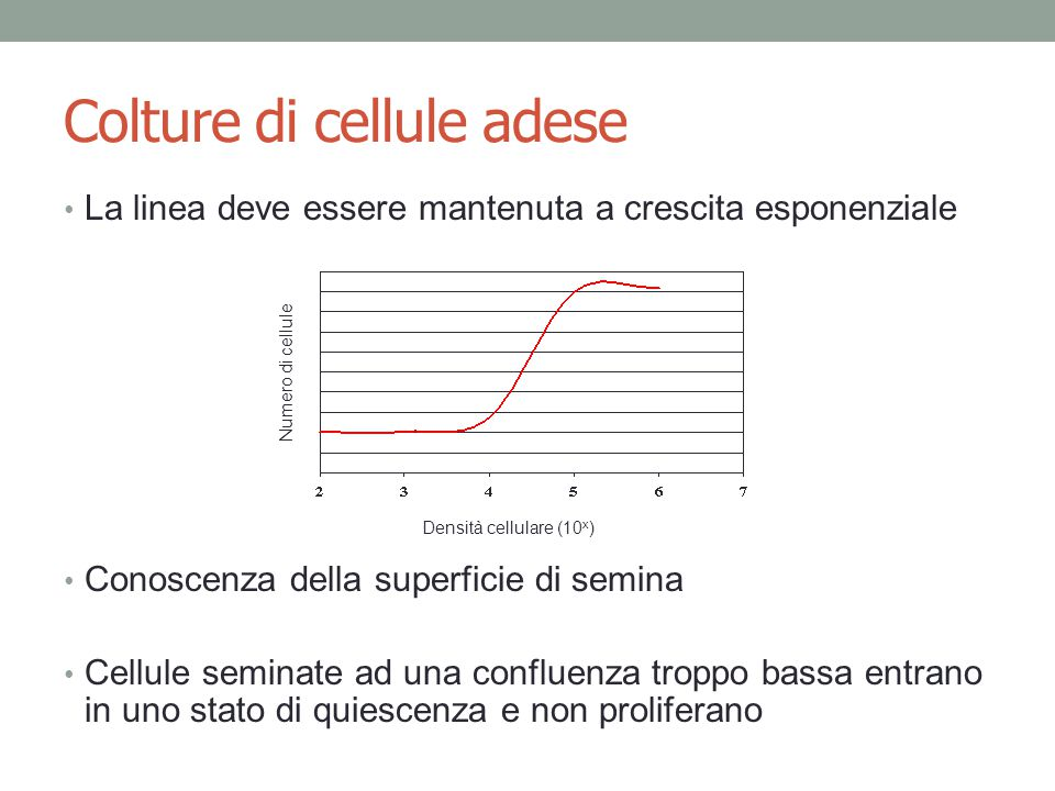 Colture di cellule adese La linea deve essere mantenuta a crescita esponenziale Conoscenza della superficie di semina Cellule seminate ad una confluenza troppo bassa entrano in uno stato di quiescenza e non proliferano Densità cellulare (10 x ) Numero di cellule