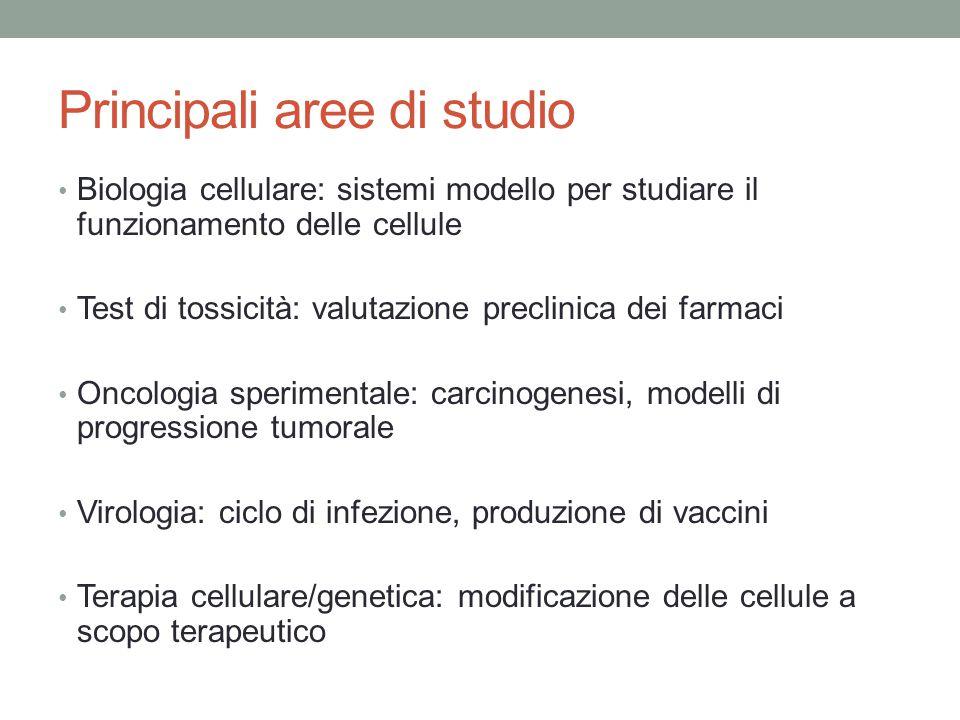 Principali aree di studio Biologia cellulare: sistemi modello per studiare il funzionamento delle cellule Test di tossicità: valutazione preclinica de