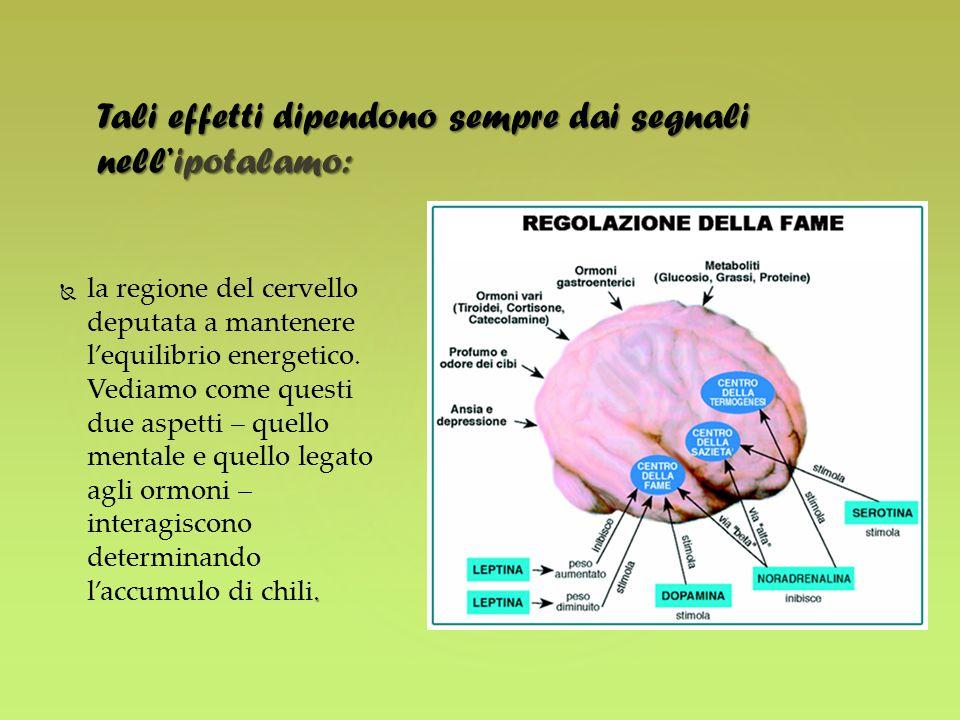 .  la regione del cervello deputata a mantenere l'equilibrio energetico. Vediamo come questi due aspetti – quello mentale e quello legato agli ormon