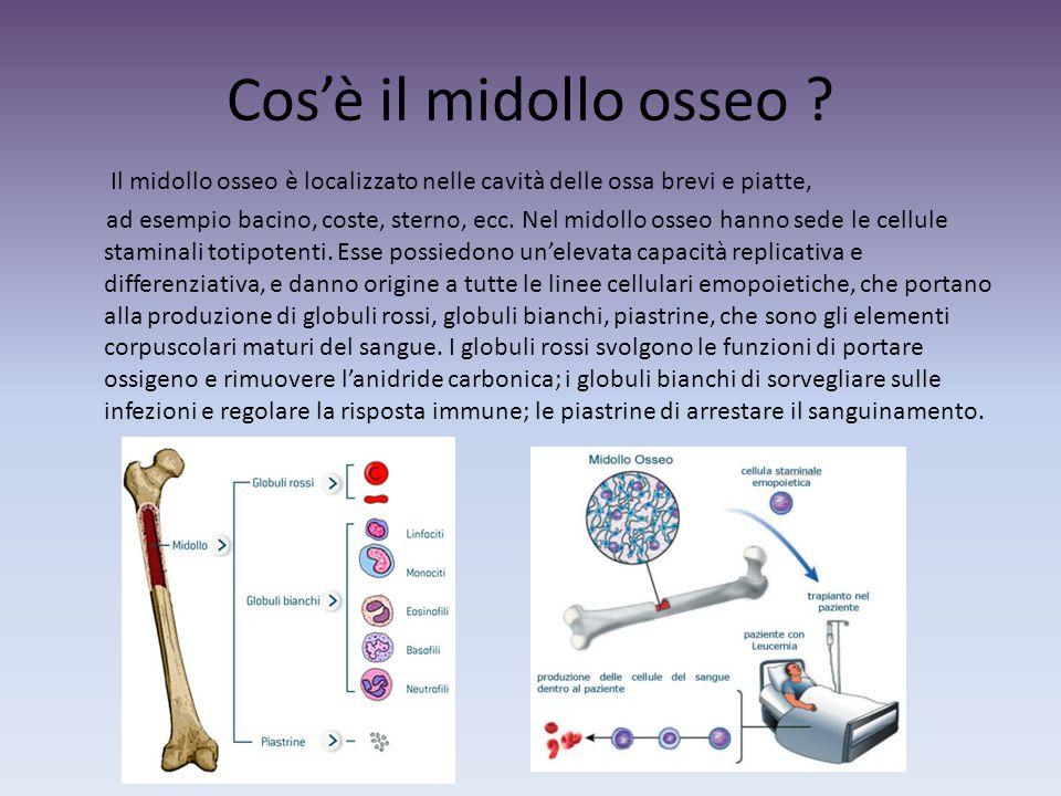 Cos'è il midollo osseo ? Il midollo osseo è localizzato nelle cavità delle ossa brevi e piatte, ad esempio bacino, coste, sterno, ecc. Nel midollo oss