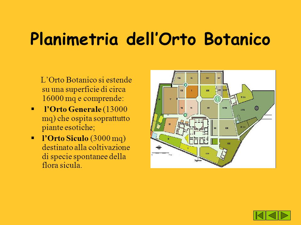 Planimetria dell'Orto Botanico L'Orto Botanico si estende su una superficie di circa 16000 mq e comprende:  l'Orto Generale (13000 mq) che ospita sop