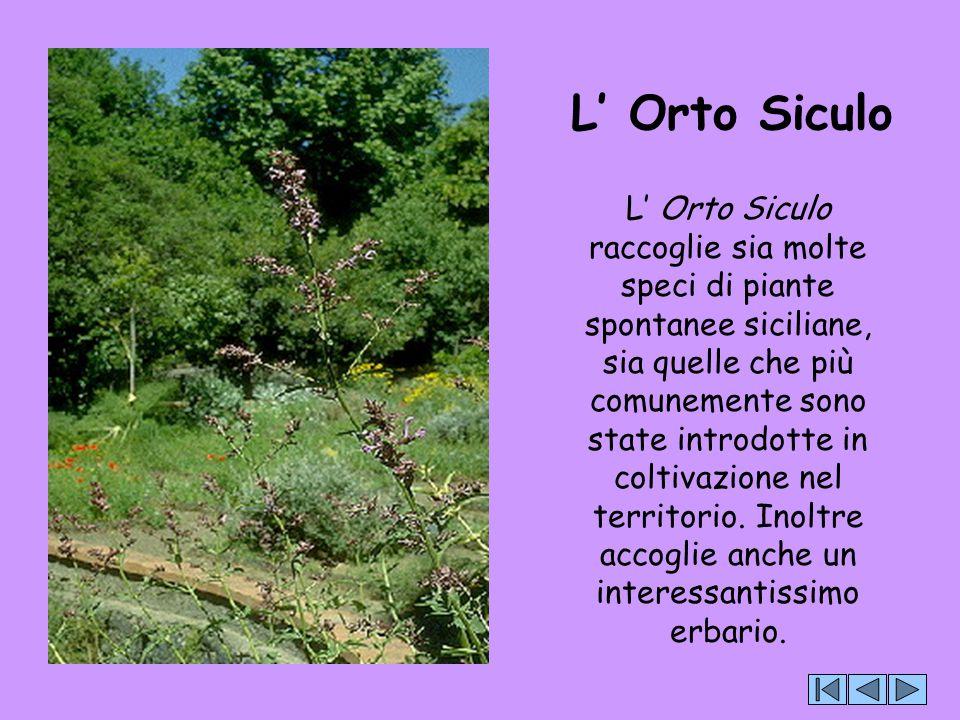 L' Orto Siculo L' Orto Siculo raccoglie sia molte speci di piante spontanee siciliane, sia quelle che più comunemente sono state introdotte in coltiva
