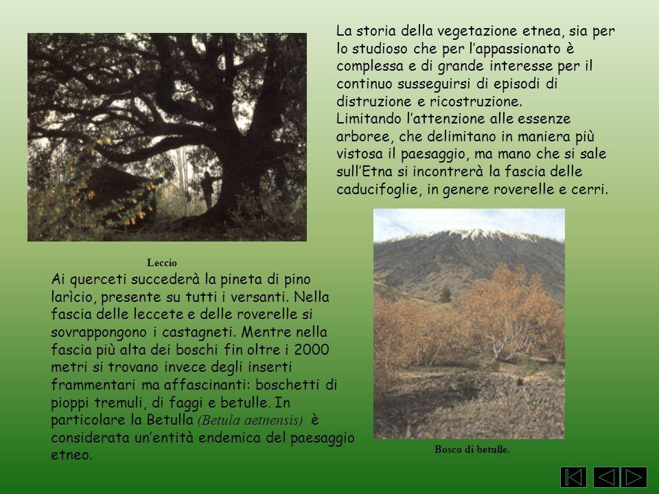 La storia della vegetazione etnea, sia per lo studioso che per l'appassionato è complessa e di grande interesse per il continuo susseguirsi di episodi