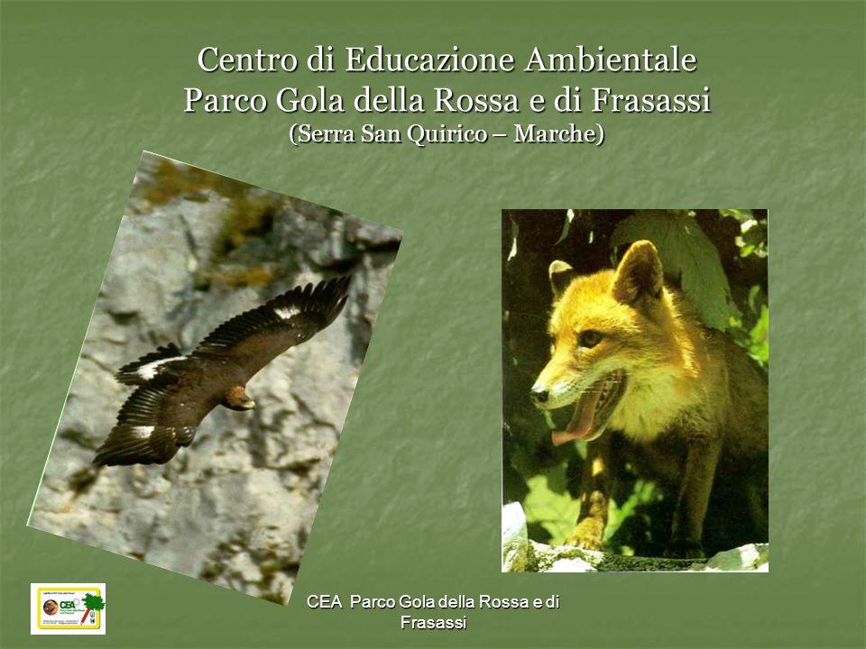 CEA Parco Gola della Rossa e di Frasassi Centro di Educazione Ambientale Parco Gola della Rossa e di Frasassi (Serra San Quirico – Marche)