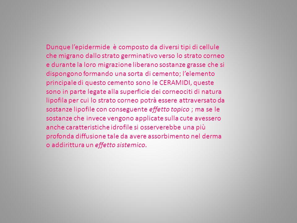 Dunque l'epidermide è composto da diversi tipi di cellule che migrano dallo strato germinativo verso lo strato corneo e durante la loro migrazione liberano sostanze grasse che si dispongono formando una sorta di cemento; l'elemento principale di questo cemento sono le CERAMIDI, queste sono in parte legate alla superficie dei corneociti di natura lipofila per cui lo strato corneo potrà essere attraversato da sostanze lipofile con conseguente effetto topico ; ma se le sostanze che invece vengono applicate sulla cute avessero anche caratteristiche idrofile si osserverebbe una più profonda diffusione tale da avere assorbimento nel derma o addirittura un effetto sistemico.