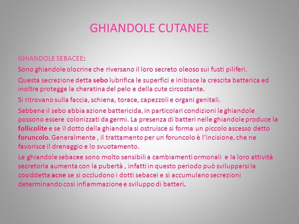 GHIANDOLE CUTANEE GHIANDOLE SEBACEE: Sono ghiandole olocrine che riversano il loro secreto oleoso sui fusti piliferi.