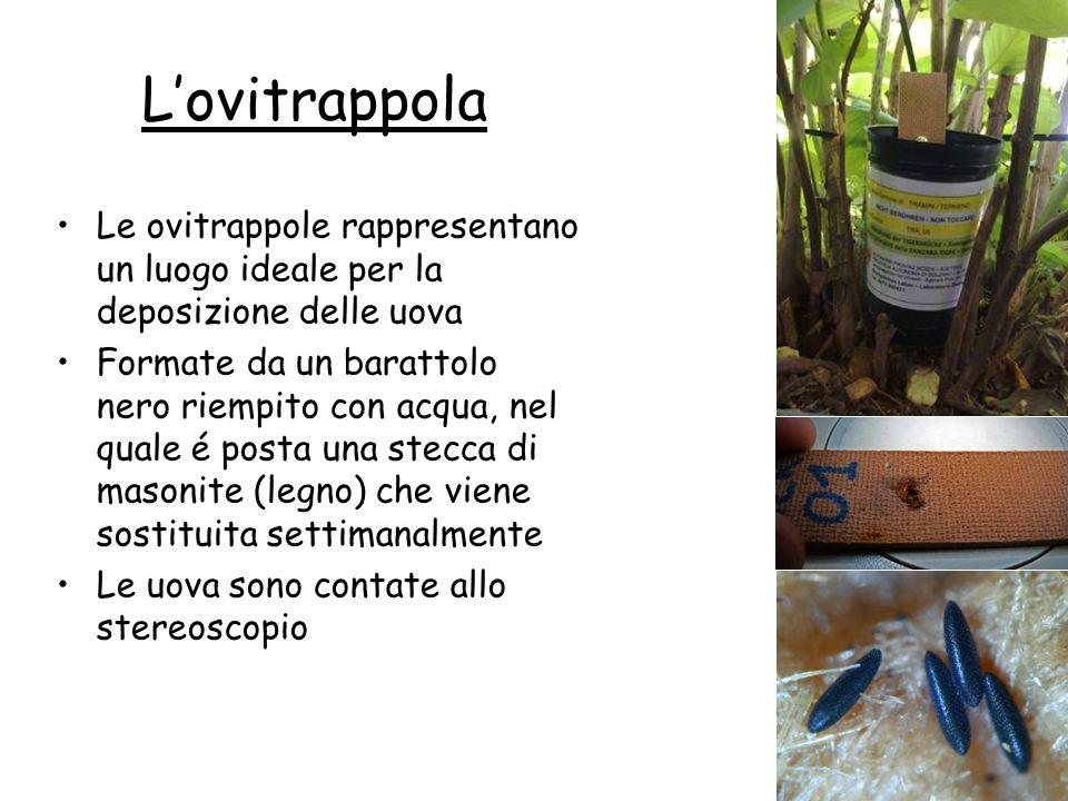 L'ovitrappola Le ovitrappole rappresentano un luogo ideale per la deposizione delle uova Formate da un barattolo nero riempito con acqua, nel quale é