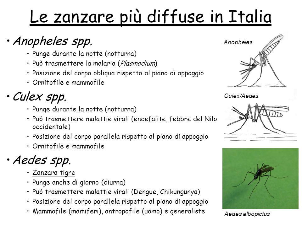 Le zanzare più diffuse in Italia Anopheles spp. Punge durante la notte (notturna) Può trasmettere la malaria (Plasmodium) Posizione del corpo obliqua
