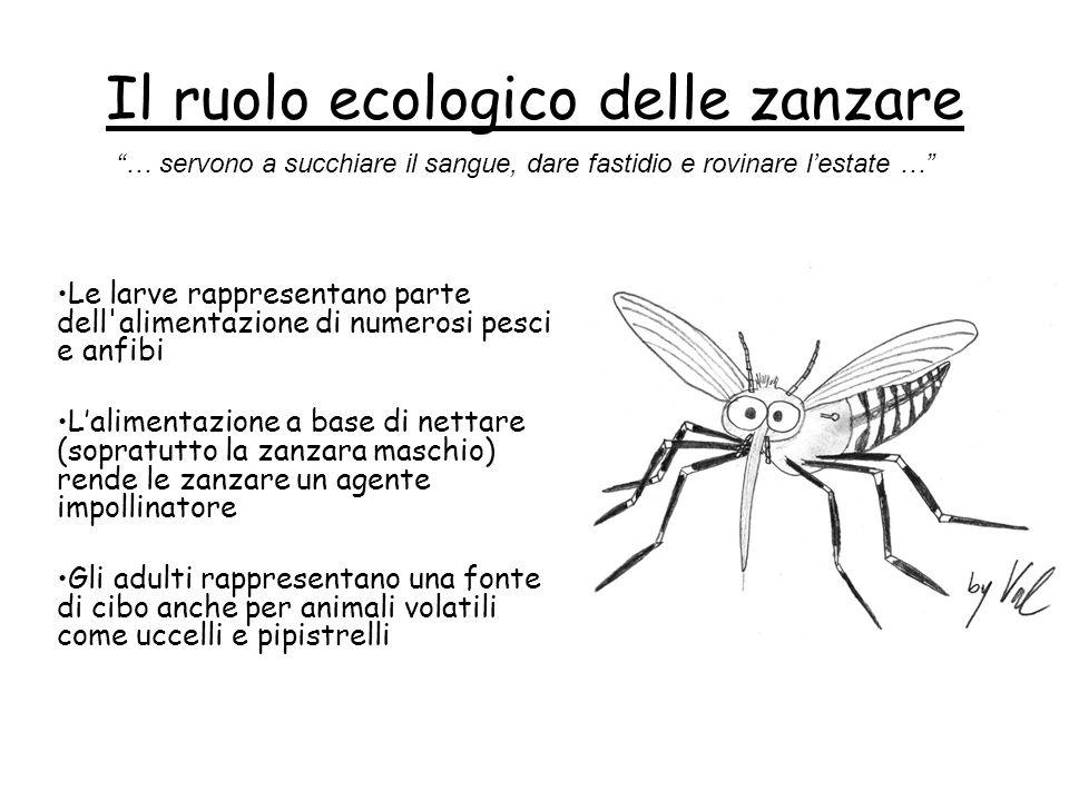 Il ruolo ecologico delle zanzare Le larve rappresentano parte dell'alimentazione di numerosi pesci e anfibi L'alimentazione a base di nettare (sopratu