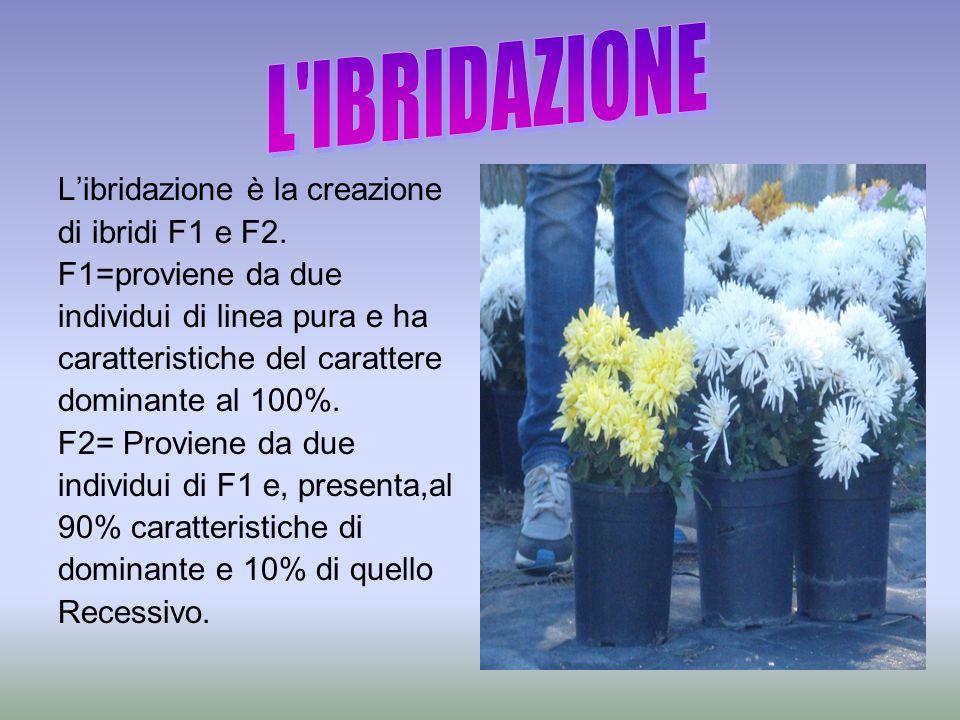 L'ibridazione è la creazione di ibridi F1 e F2. F1=proviene da due individui di linea pura e ha caratteristiche del carattere dominante al 100%. F2= P