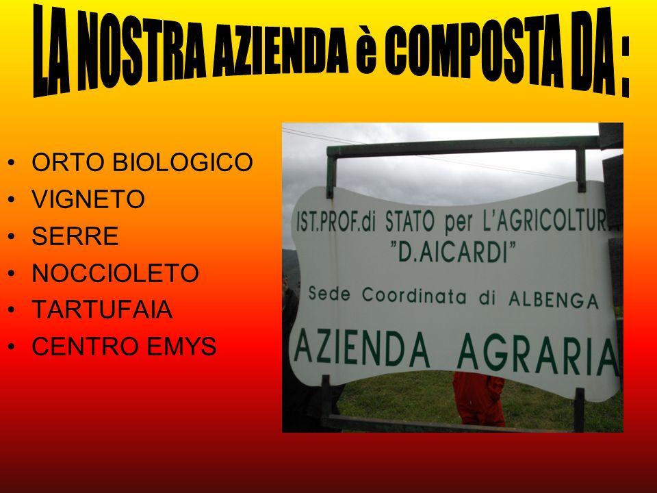 ORTO BIOLOGICO VIGNETO SERRE NOCCIOLETO TARTUFAIA CENTRO EMYS