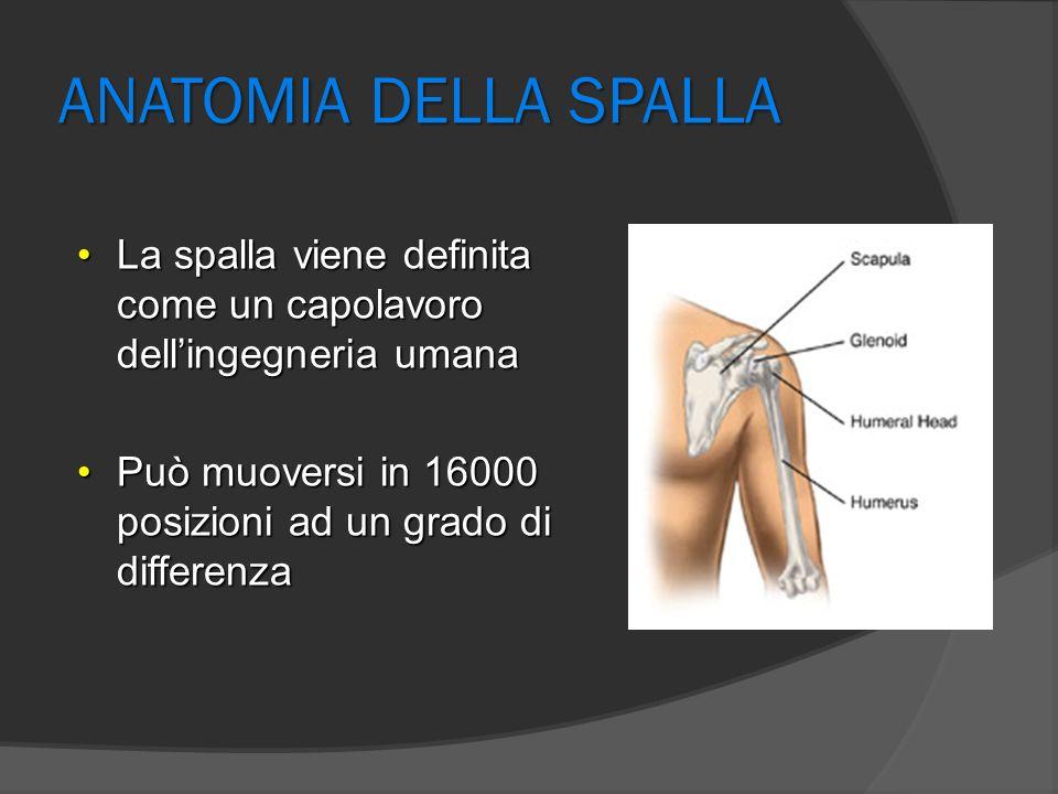 Anatomia della spalla  Enartrosi con un elevato grado di articolarità, per direzionare al meglio l'arto superiore affinché la mano venga orientata per le sue funzioni prensili e sensitive  Formata da un insieme di articolazioni anatomiche e funzionali  La maggior parte del movimento avviene nella glenoomerale dove si ha principalmente una rotazione  Deve essere stabile 1 2 3 4 5 1 glenoomerale 2 sottoacromiale 3 scapolotoracica 4 acromionclaveare 5 sternocostoclaveare