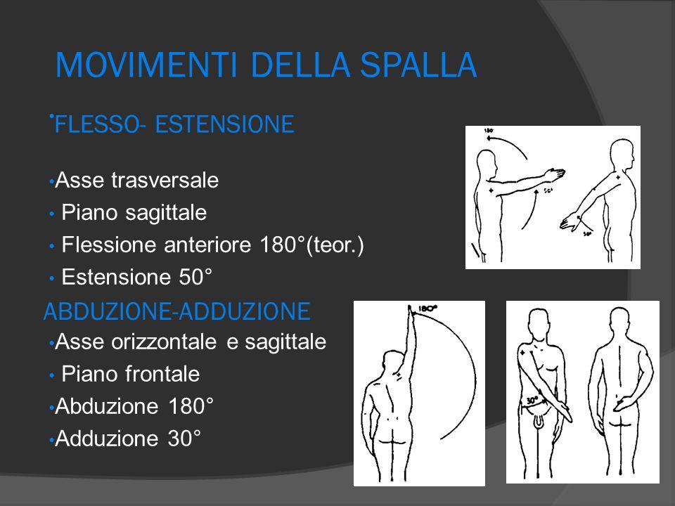 FLESSO- ESTENSIONE Asse trasversale Piano sagittale Flessione anteriore 180°(teor.) Estensione 50° MOVIMENTI DELLA SPALLA ABDUZIONE-ADDUZIONE Asse ori