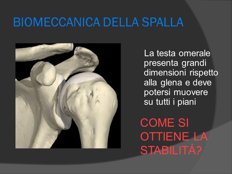 Muscoli della cuffia dei rotatori Piccolo rotondo  O: margine laterale scapola  I: grande tuberosità omero  E' il muscolo più piccolo della cuffia  Extra-rotatore (12%)  Depressore e coattatore della testa nella glenoide