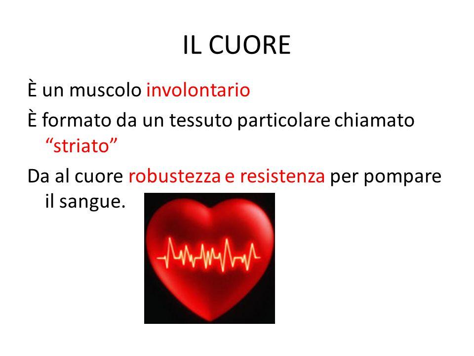 IL CUORE È un muscolo involontario È formato da un tessuto particolare chiamato striato Da al cuore robustezza e resistenza per pompare il sangue.