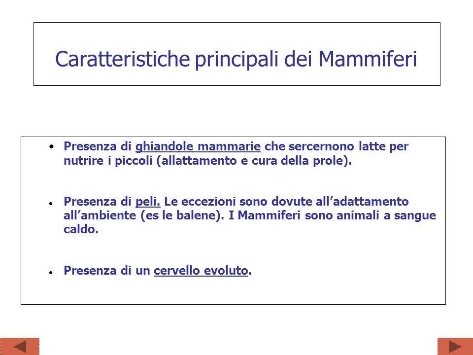 In base al tipo di riproduzione i mammiferi si distinguono in: Classificazione dei Mammiferi MONOTREMI MARSUPIALI PLACENTALI