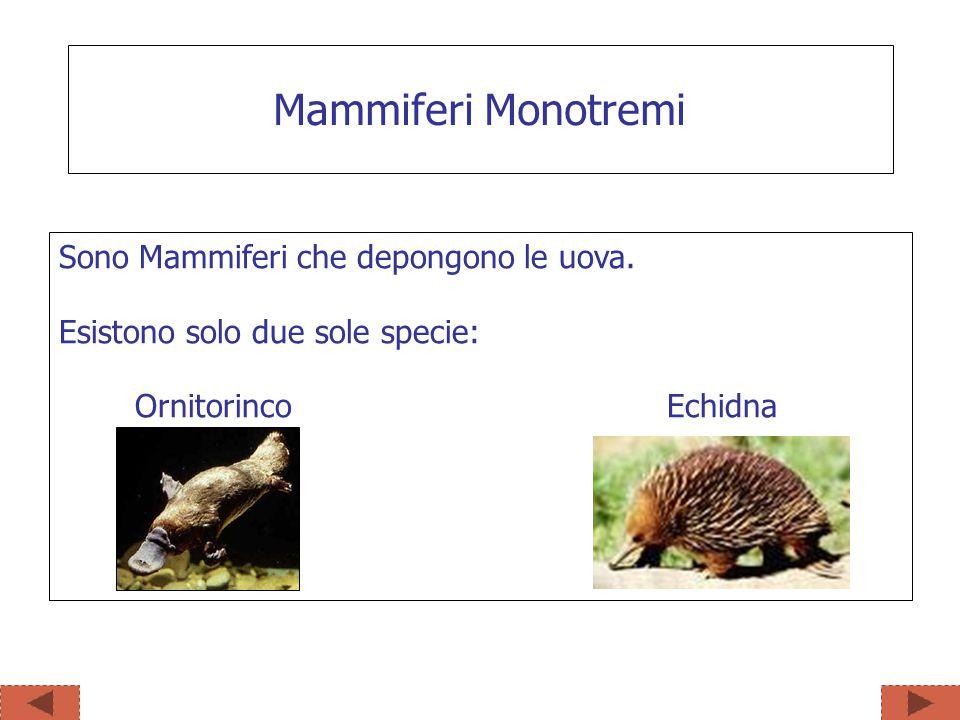Sono Mammiferi che depongono le uova. Esistono solo due sole specie: Ornitorinco Echidna Mammiferi Monotremi