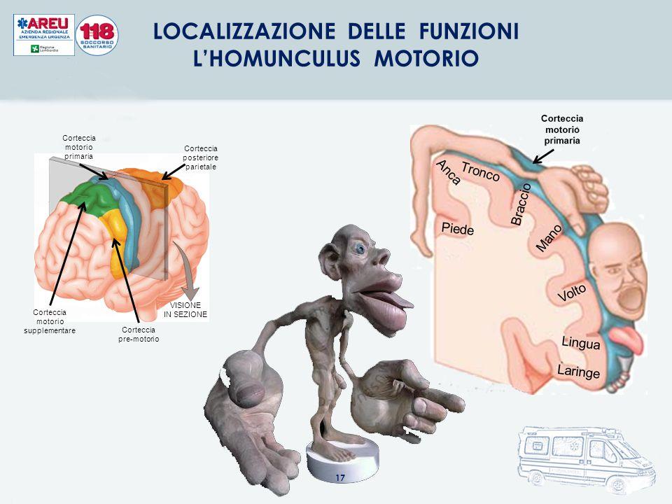 LOCALIZZAZIONE DELLE FUNZIONI L'HOMUNCULUS MOTORIO VISIONE IN SEZIONE Corteccia posteriore parietale Corteccia motorio primaria Corteccia motorio supp