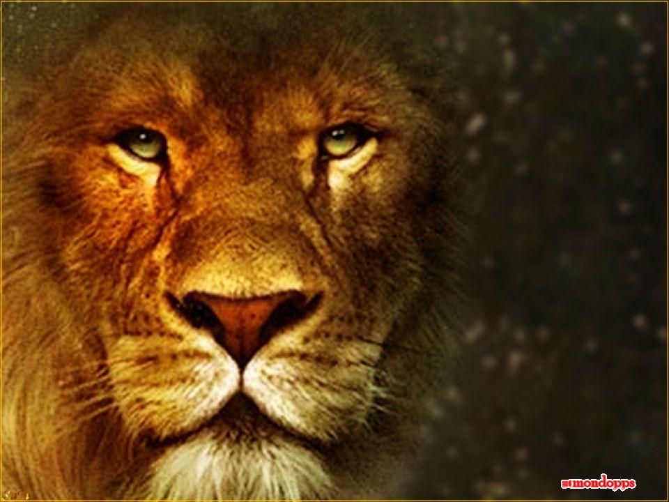 Ruda el leon Ruggisce il leone Ruggisce il leone, il leone che è dentro di me, ruggisce per le cose belle, ruggisce quando le persone ti fanno accapponare la pelle.