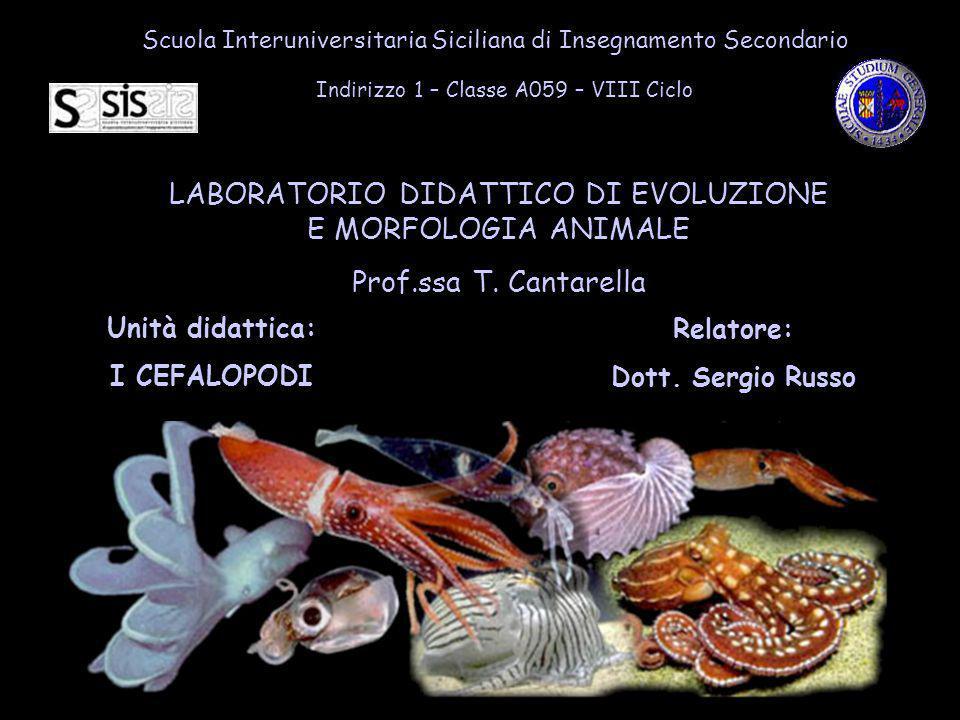 Scuola Interuniversitaria Siciliana di Insegnamento Secondario Indirizzo 1 – Classe A059 – VIII Ciclo LABORATORIO DIDATTICO DI EVOLUZIONE E MORFOLOGIA