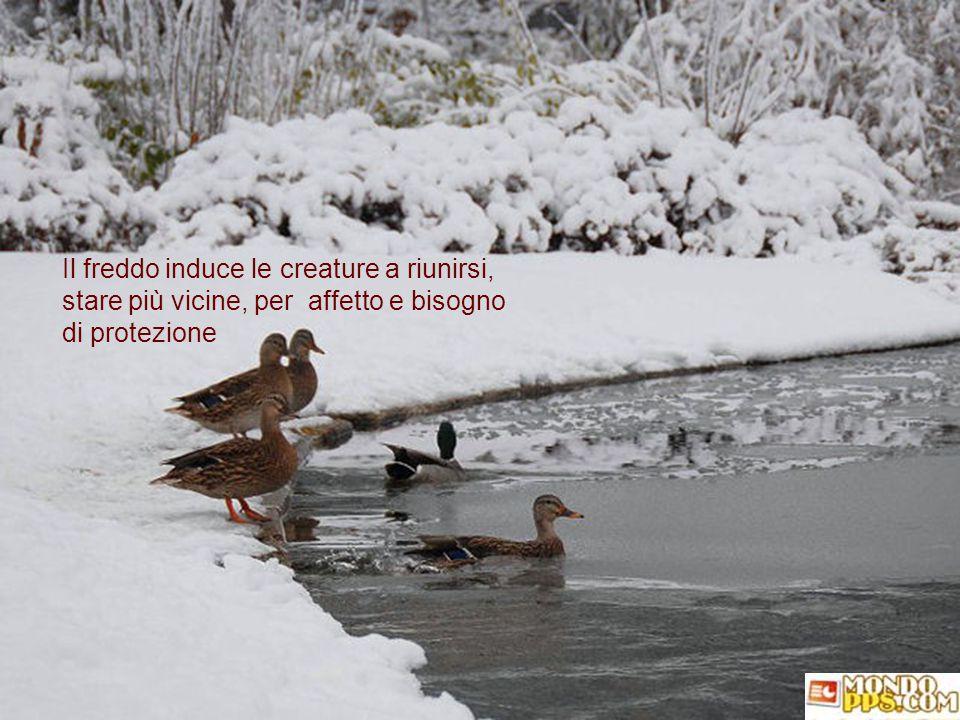 non solo noi, ma anche i nostri amici animali, che osservano stupefatti tutti i cambiamenti dei luoghi e, forse, stentano a riconoscerli.