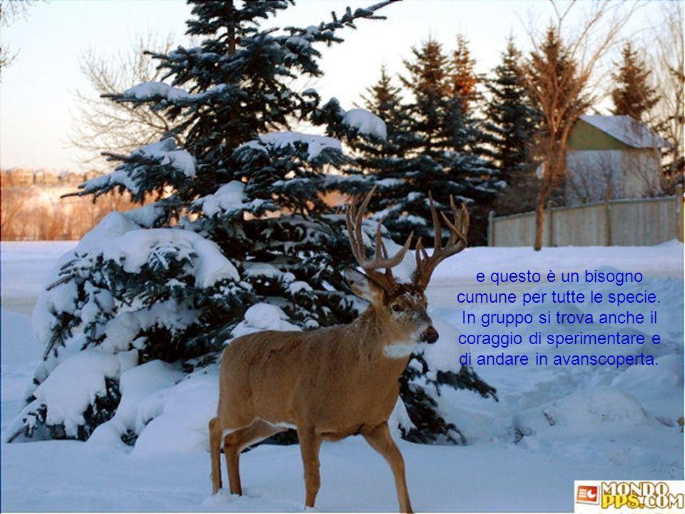 Il freddo induce le creature a riunirsi, stare più vicine, per affetto e bisogno di protezione
