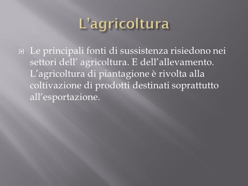  Le principali fonti di sussistenza risiedono nei settori dell' agricoltura.