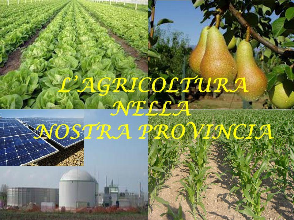 Territorio Superfice Totale: 178.900 ha (1ha = 10000 mq) Superfice Agricola Totale: 129.667 ha Superfice Agricola Utilizzata: 117.915 ha Fonte ISTAT 2011 6° censimento agricoltura