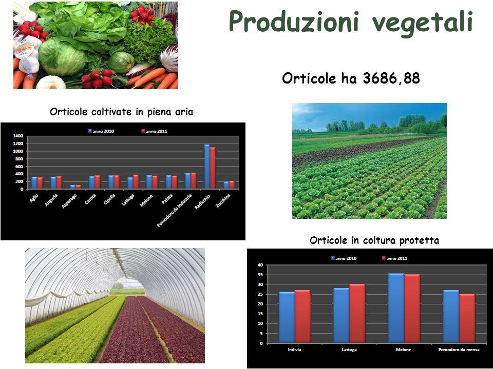 Produzioni vegetali Orticole ha 3686,88 Orticole coltivate in piena aria Orticole in coltura protetta