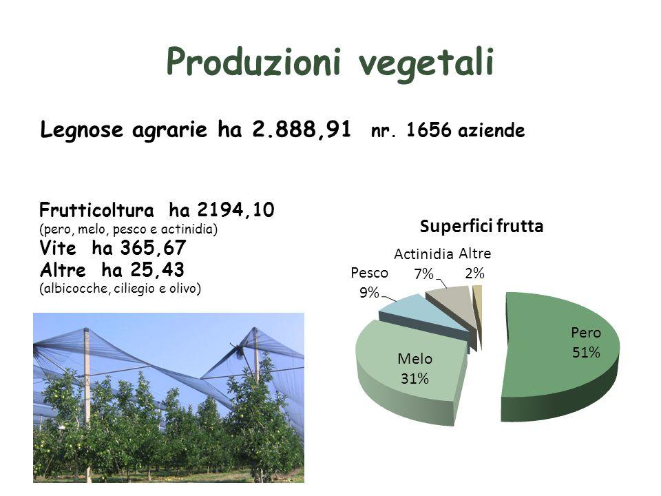 Produzioni vegetali Legnose agrarie ha 2.888,91 nr.