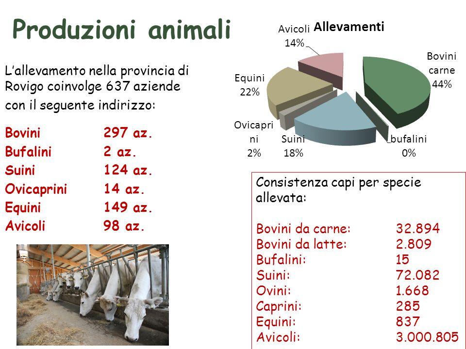 Produzioni animali L'allevamento nella provincia di Rovigo coinvolge 637 aziende con il seguente indirizzo: Bovini 297 az.