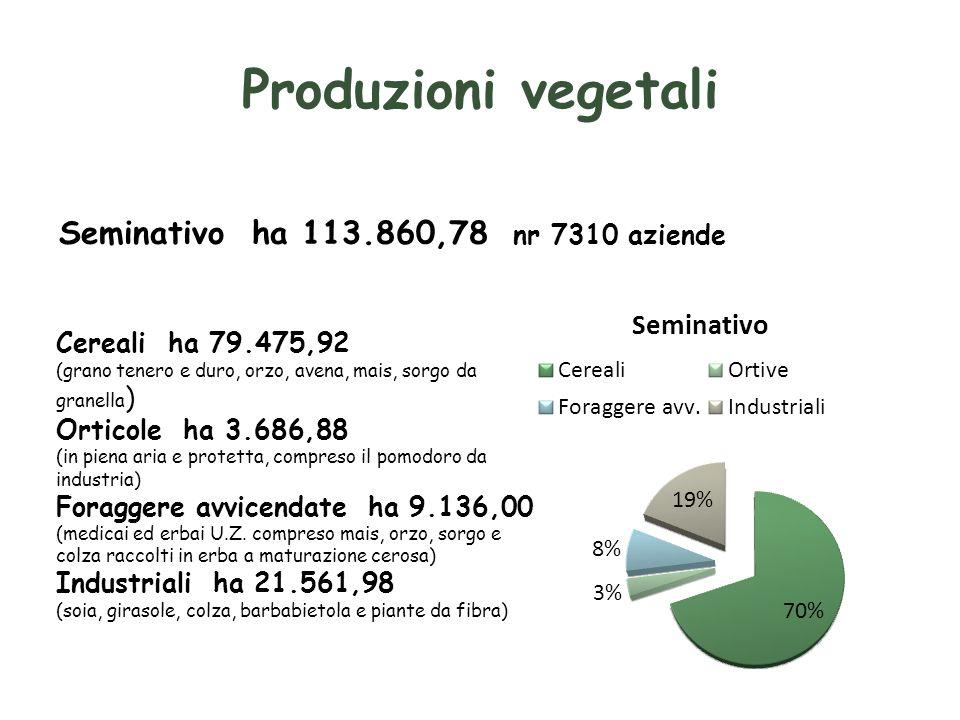 Produzioni vegetali Seminativo ha 113.860,78 nr 7310 aziende Cereali ha 79.475,92 (grano tenero e duro, orzo, avena, mais, sorgo da granella ) Orticole ha 3.686,88 (in piena aria e protetta, compreso il pomodoro da industria) Foraggere avvicendate ha 9.136,00 (medicai ed erbai U.Z.