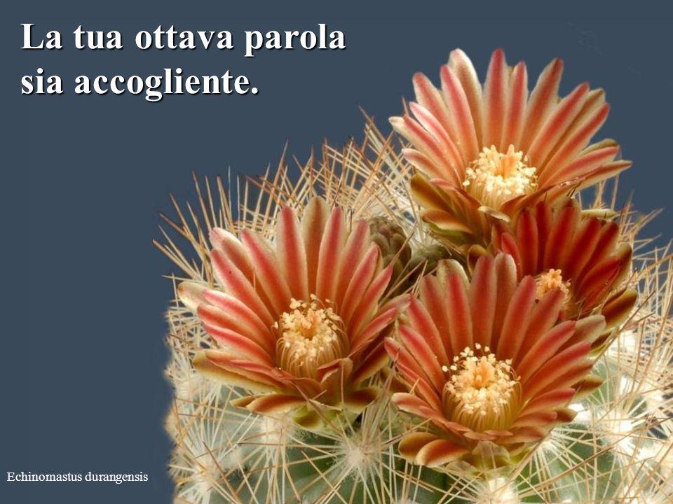 Echinocereus subinermis La tua settima parola sia consolante.