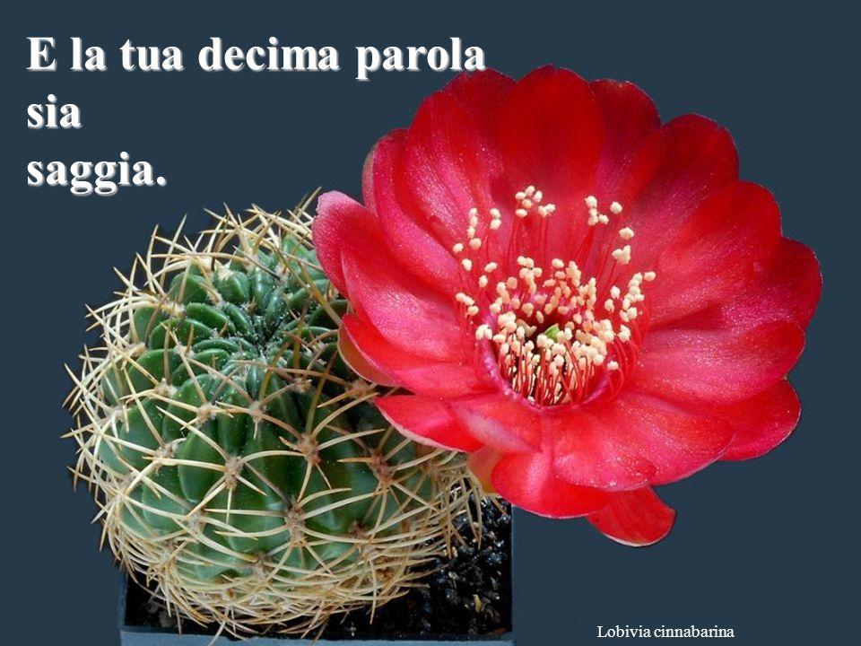 Ferobergia hybride La tua nona parola sia rispettosa.