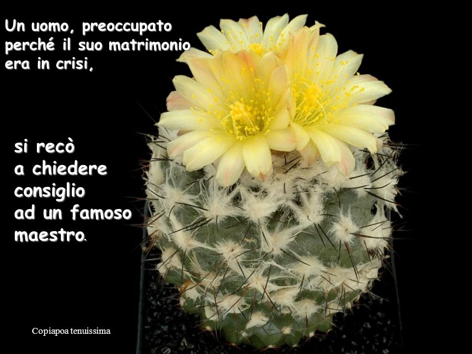 Mammillaria slevinii OGNI PAROLA … ASCOLTAREASCOLTARE