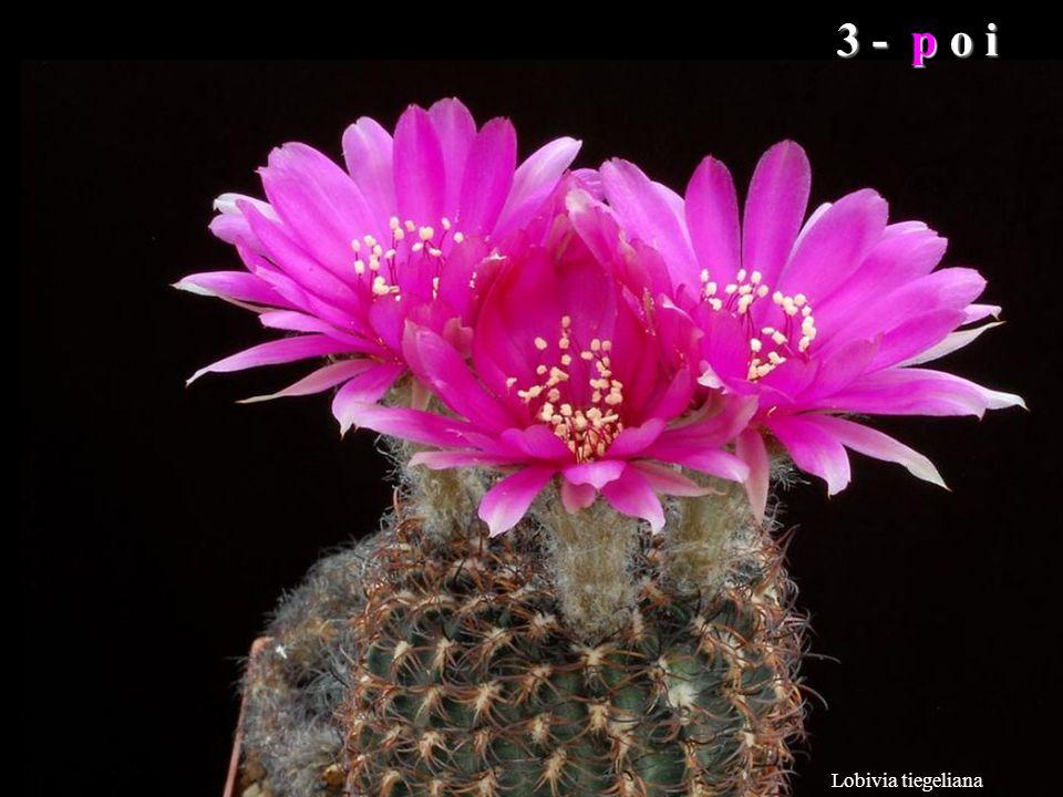 Mammillaria albiflora Perché l'uomo non dica troppi spropositi, Dio gli ha donato dieci dita perché possa ricordare alcuni saggi consigli: