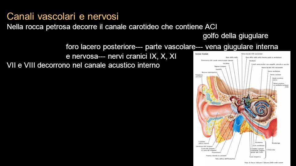Canali vascolari e nervosi Nella rocca petrosa decorre il canale carotideo che contiene ACI golfo della giugulare foro lacero posteriore--- parte vasc