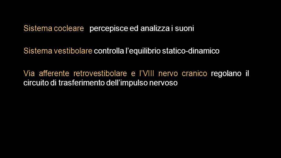Sistema cocleare percepisce ed analizza i suoni Sistema vestibolare controlla l'equilibrio statico-dinamico Via afferente retrovestibolare e l'VIII ne