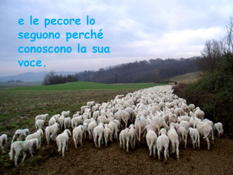 e le pecore lo seguono perché conoscono la sua voce.