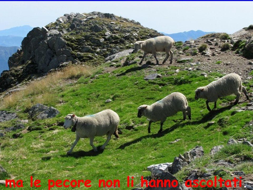 ma le pecore non li hanno ascoltati.